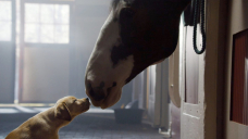 Budweiser becomes latest Astronomical Bowl commercial stalwart to sit out this one year's broadcast