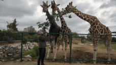 No profits, 2,000 mouths to feed: Lockdown squeezes Greek zoo