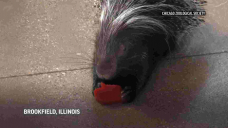 Early Valentine's Day for Illinois zoo animals