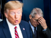 Fauci says he lost the ability to influence Trump after he decided to 'focal level on the re-election' instead of stopping the virus