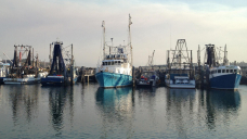 Environmentalists and fishers clash over best way to prevent entanglements