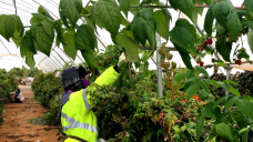 Call for royal commission into Australia's horticulture sector