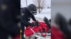 Roaming seal pup crosses P.E.I. highway before being picked up by police