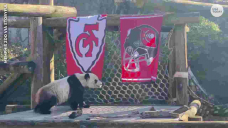 Tall Bowl LV: Animals pick who will win the big football game