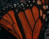 Saving the Butterfly Wooded space