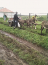Handiest a donkey cart can transport coffin to grave