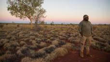 Australian native sandalwood at threat, industry groups warn