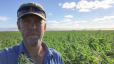Industrial hemp farmers eye best yield yet, but growing the consumer market is the problem