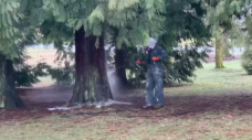 Racist graffiti spray-painted on trees in Vancouver park