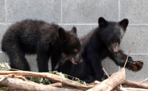 This conservation officer who refused to kill two baby bears won a long legal battle — but the government still won't let him go back to work