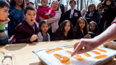 Bringing Quebec cuisine house: Sugar shacks sell gourmet kits in bid for survival