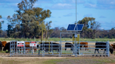 CSG insurance clause 'tall on spin, light on factor', lawyer says, in its bid to protect farmers