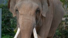 Texas zoo cancels controversial deal to buy African Lion Safari elephants for $2M