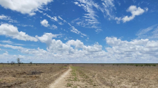 Rain falls but fails to grow grass in north-western Queensland