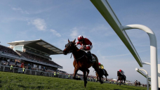 Trainer's year-ban over dead horse photo