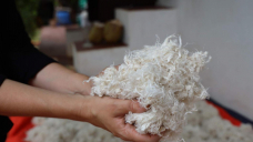 Is there any such thing as 'vegan wool'?