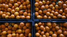 Pacific fruit pickers bound for SA