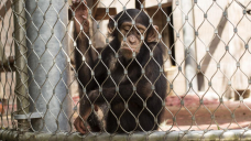 Boy has finger torn off by monkey in horror attack at Portuguese zoo