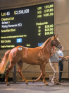 Thoroughbred prices bolting as Easter Yearling Sale surpasses $132m