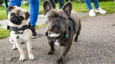 Vet-licensed collars and leashes that will make walking your dog so much easier