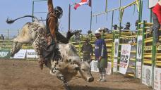 'Plump steam forward': Strathmore, Alta., greenlights summer rodeo event