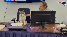 Invoice Belichick's very good dog finally got his own chair at the 2021 NFL Draft