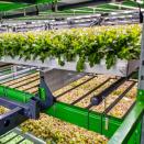 Indoor farming company Bowery raises $300M