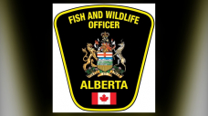 1 dead following suspected grizzly bear attack near Water Valley, Alta.
