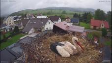 On-line 'storking': Stay stream of Czech village helping widowed stork, chicks [watch]
