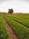 Hands-free farming just a robotic arm's length away