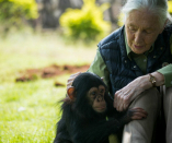 In conversation with Jane Goodall: World needs 'original mindset for survival'