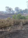 Bushfires rewrite smoke, fire management in vineyards