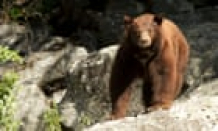 California teen who shoved bear to save canines: 'I didn't know I had it in me'