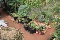 Nolukhanyo Grow – communities helping themselves