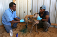 Gazans mourn pets lost during last round of clashes