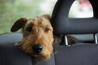 Winnipeg animal services warns not to leave your pets in hot vehicles