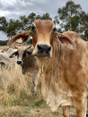 Farmers' share of the pie shrinks, while Australia's farm gate value soars to record highs