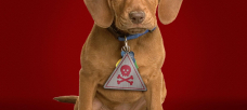 Seresto pet collars under EPA review, but the fight over their safety could take years