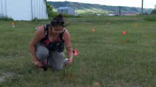 751 lights to mark unidentified graves at Cowessess First Nation for Saturday vigil