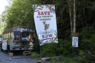 Old fashioned-insist logging protesters in B.C. will not leave despite threat of wildfires