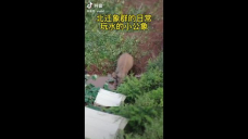 Migrating Elephant Takes a Dip in China's Yunnan Province