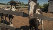 Facebook group provides contacts, support for B.C. residents with livestock fleeing wildfires