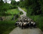 Saskatchewan confirms case of anthrax in South Qu'Appelle sheep