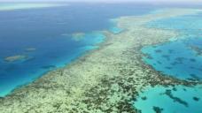 UNESCO pursuing 'endangered' reef plan