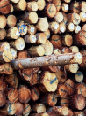 SA timber mills back in action after government changes essential service advice