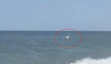 Gaze: Beachgoers in awe as great white shark ambushes seal