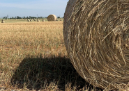 CFA working on initiative to send hay from Jap Canada to Western farmers