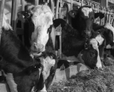 Is It Time to Spoil Up Substantial Ag?