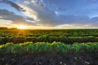 Fintech is transforming the world's oldest asset class: Farmland
