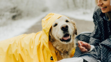 12 dog raincoats to keep your pup dry and adorable
